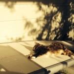 Catty Thursday: Puss on a SUP